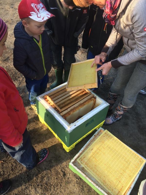 Kinder sehen wo die Bienen wohnen